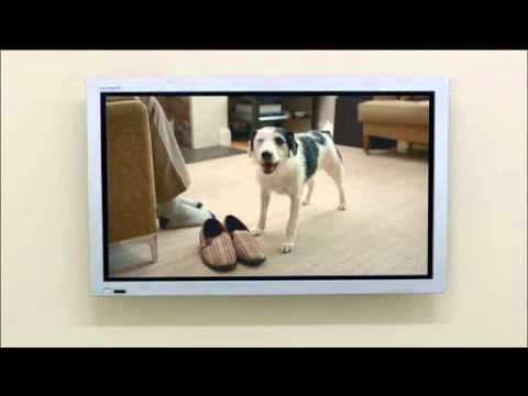 Harvey Dog Home - A Dog Sells The Benefits Of TV Advertising Funny