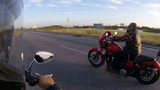 8. Harley sportster 1200 Custom racing Harley Dyna Street bob