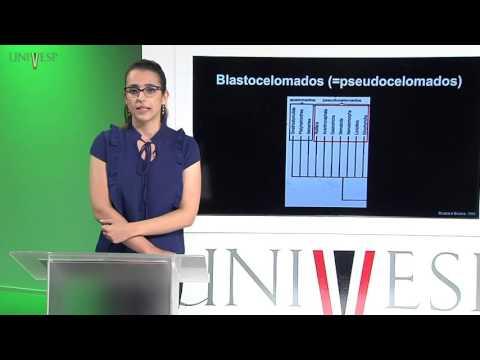 Zoologia de Invertebrados - Aula 9 - Filo Gnathostomulida e Rotifera