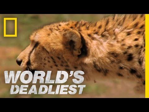 World's Deadliest: Pack Hunters...
