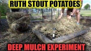 Ruth Stout Potatoes   Deep Mulch Experiment