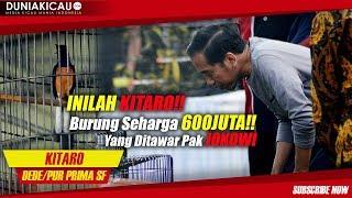Video INILAH KITARO!! Burung Seharga 600 JUTA Yang Ditawar Pak JOKOWI MP3, 3GP, MP4, WEBM, AVI, FLV Maret 2018