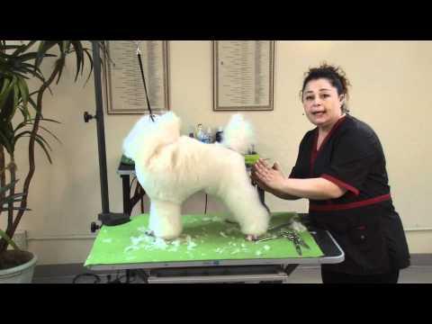 Poodle Puppy Show Trim