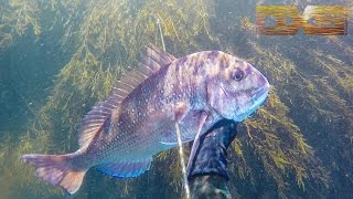 Matauri Bay New Zealand  city pictures gallery : Snapper Snoop At Matauri Bay 4K