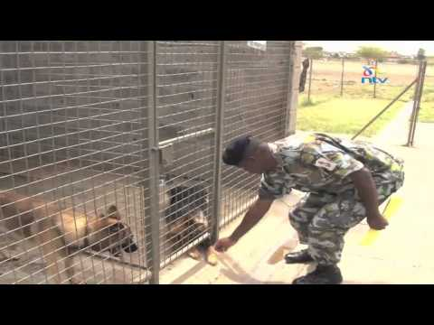 Kenya at 50 Series: Women in the Military part 2 (Canine Regiment)