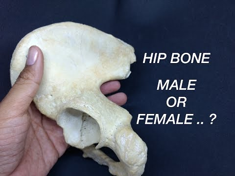HIP BONE - GENDER DIFFERENCES