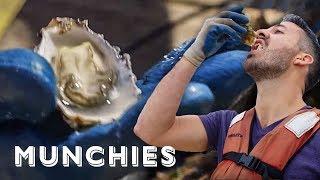 Video Shucking 2,000 Oysters A Day At Hog Island MP3, 3GP, MP4, WEBM, AVI, FLV Januari 2019