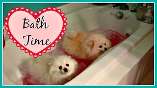 OUR POMERANIANS & YORKIE DOGS HATE BATH TIME