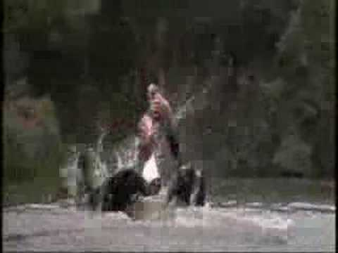 從15秒開始看,人類大戰鱷魚!!超猛的啦~