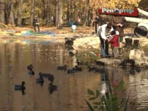 Парк Гагарина заполонили дикие утки (видео)