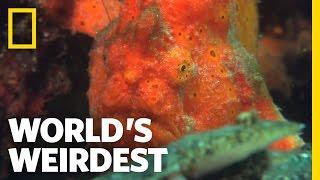 World's Weirdest - Amazing Speed-Gulp Killing