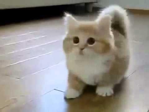 Lustige Katzen – niedlichen Katzen