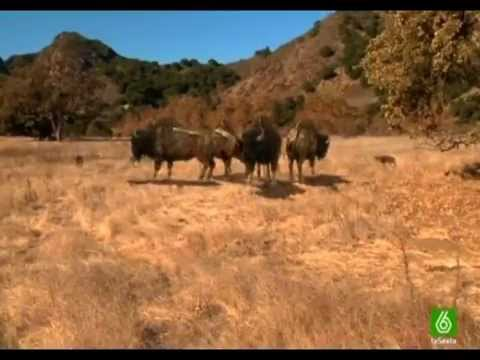 Video Lobos gigantes documental