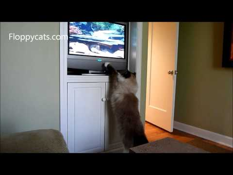0 Videos For Cats To Watch