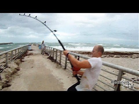 Extreme - WEBSITE: http://blacktiphfishing.org You may live your life and never see anything like this! The entire Sebastian inlet was filled with pinfish. The tarpon,...