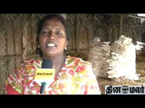 mushroom cultivation - Mushroom Cultivation video tamil.