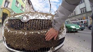 Samochód ochrony zaatakowany przez rój pszczół!