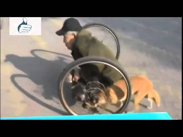 Loyal Dog Pushes The Wheels For Disabled Old Man