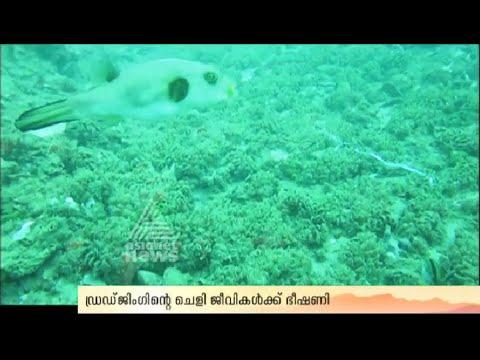 Dredging in Vizhinjam will destroyed the coral reefs