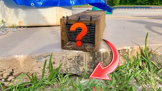 Video WHAT WAS LIVING UNDER MY GRANDMAS PORCH?! WE TRAPPED IT! MP3, 3GP, MP4, WEBM, AVI, FLV Agustus 2019