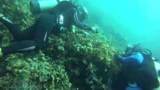 Bahia de los Angeles - Seahorse Adventure