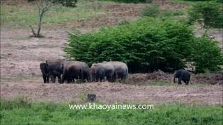 dusty wild elephants