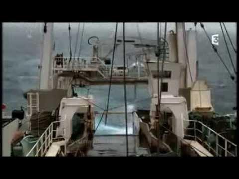 Reportage Thalassa - France 3 - MOLECULE