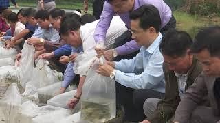 Huyện Hoành Bồ thả 7.500 con cá giống tái tạo nguồn lợi thủy sản
