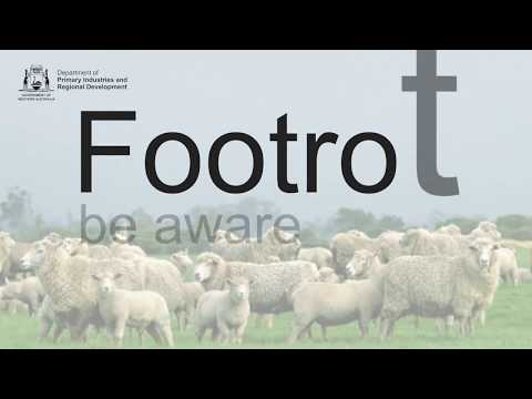 Footrot be aware   Department of Primary Industries and Regional Development