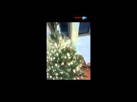 stromeček u nás doma