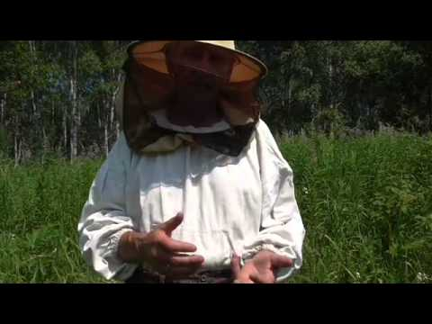 Пчеловодство. Смотреть онлайн: В ОЖИДАНИИ ОТКАЧКИ МЁДА