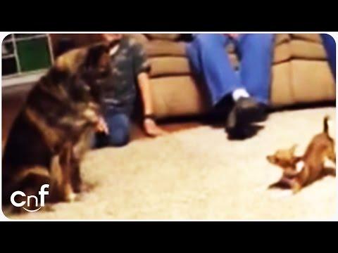 3 cani stanno giocando: la reazione di quello grande vi farà morire!