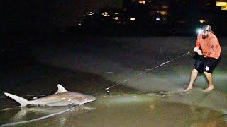 Video Shark Fishing Battle | Dude Perfect MP3, 3GP, MP4, WEBM, AVI, FLV Januari 2019