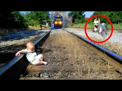 13 Amazing Pets Who Saved Their Owners