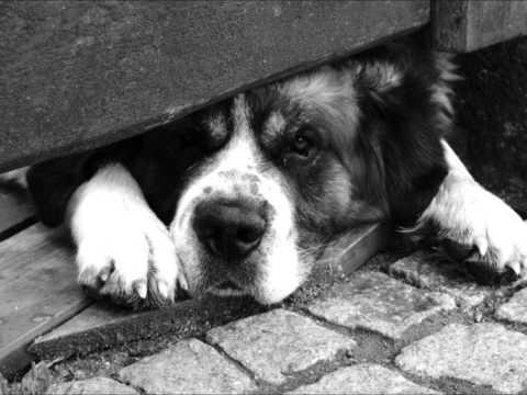 STARE DOBRE MAŁŻEŃSTWO - Zabraknie Ci psa (audio)