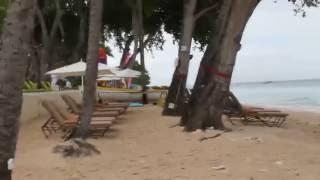 Manchineel Trees, Paynes Bay,  Barbados / Дерево Манцинелла, Залив Пейнс, Барбадос