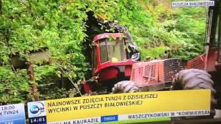 Stuletnie drzewa-potwierdzone! Teraz są wyrzynane w Puszczy Białowieskiej!!!