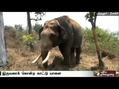 Forest-officials-attempt-to-trap-wild-elephant-in-Nilgiri