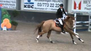 Clear round - Young Horses - Stal Hulsterlo 16/01/2016 ° 2011  Vinesse (Oklund x Heartbreaker) x Gipsy van den Bremheuvel...