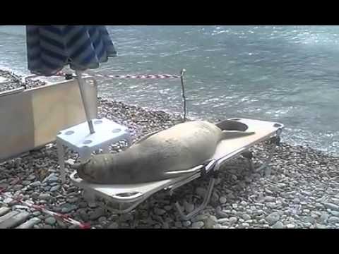 Zonnende zeehond