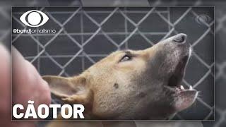 Cão Cantor: cachorro considerado extinto é encontrado vivendo na Indonésia