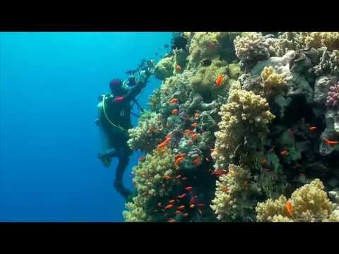 scuba diving - Highlights from Red Sea diving in April 2013. The Hammer Head shark encounter was definitely the highlight. The great visibility was, however, what I remembe...