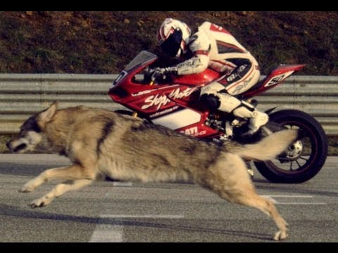 Ducati Panigale Superbike 1199 - Moto and Wolf