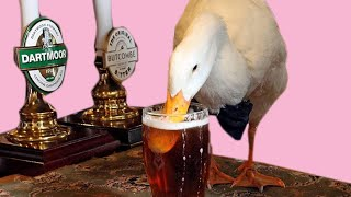 Duck Walks Into Pub, Downs Pint, Fights Dog, Loses | Simon's Peculiar Portions