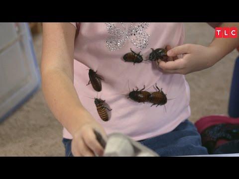 9-vuotiaan tytön valtava kokoelma torakoita – Tämä video voi puistattaa!