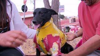 Costureira de São Roque confecciona e doa roupinhas para cachorros de rua