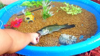 DIY HOMEMADE POOL FISH POND Aquarium!
