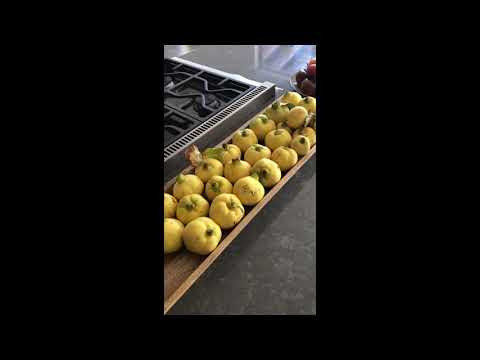 Quince Harvest – #Shorts Test