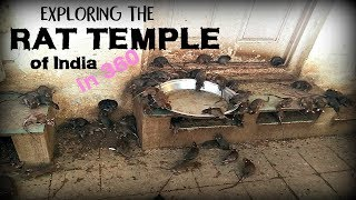 Exploring the Rat Temple of India