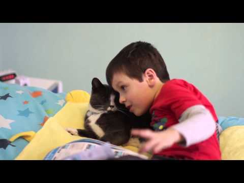 Fraser - Billy the cat was rescued from an abandoned house. Fraser was a two-year-old autistic child with a multitude of problems when he first met Billy at the cat p...
